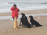 Hundedompteuse am Strand